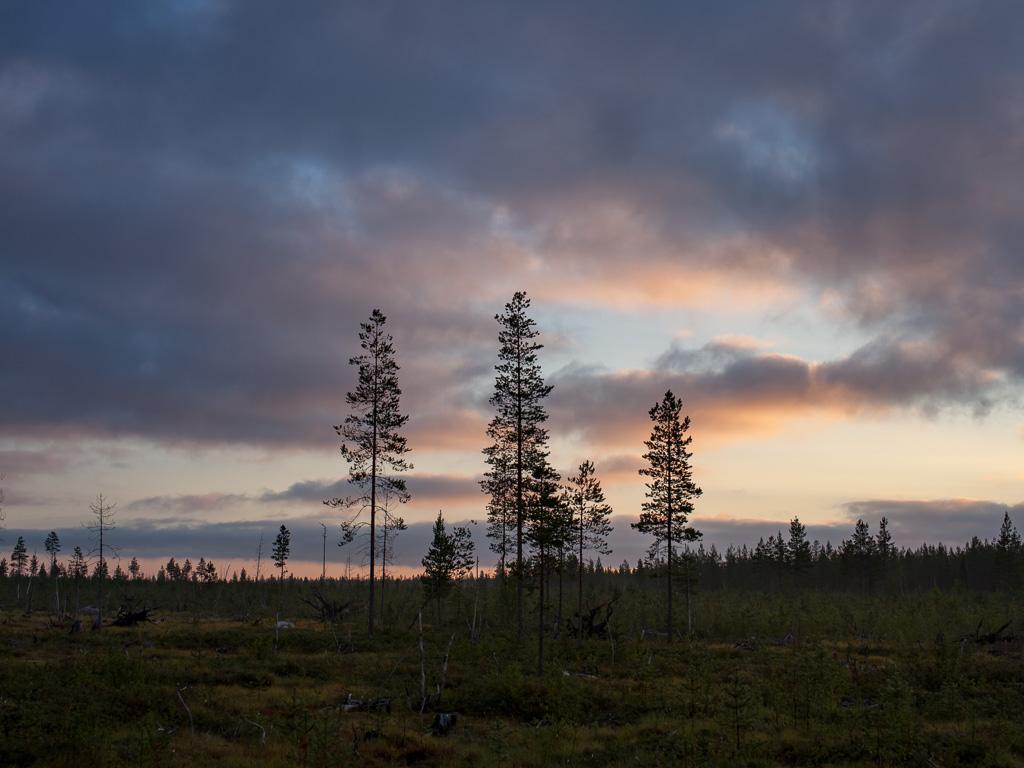 Lapponia_Finlandia_Svezia_Autunno_Foliage_-10