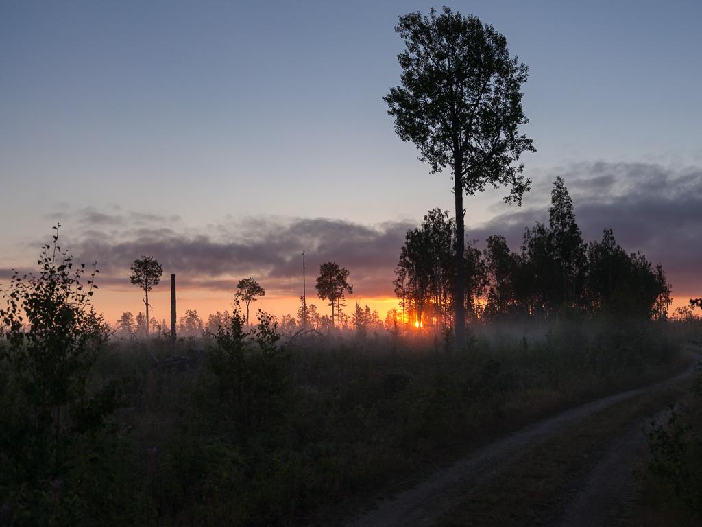 Lapponia_Finlandia_Svezia_Autunno_Foliage_-24