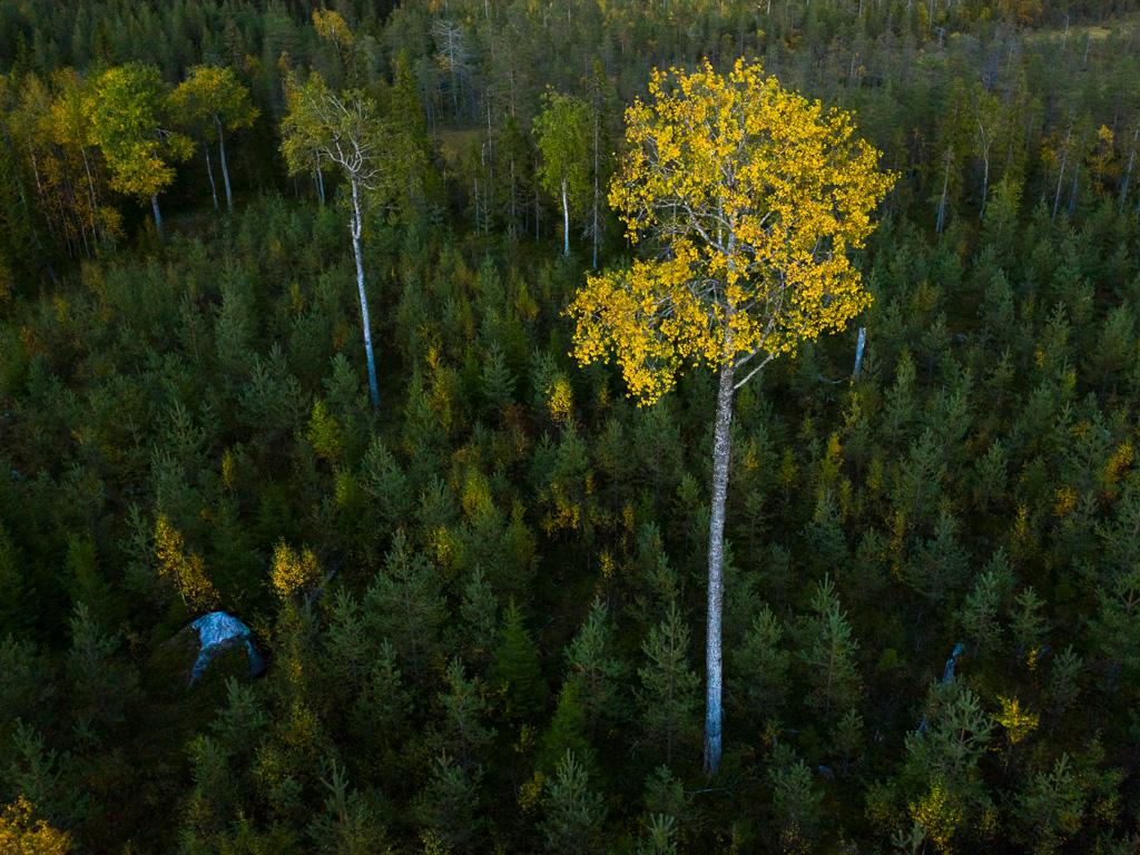 Lapponia_Finlandia_Svezia_Autunno_Foliage_-37