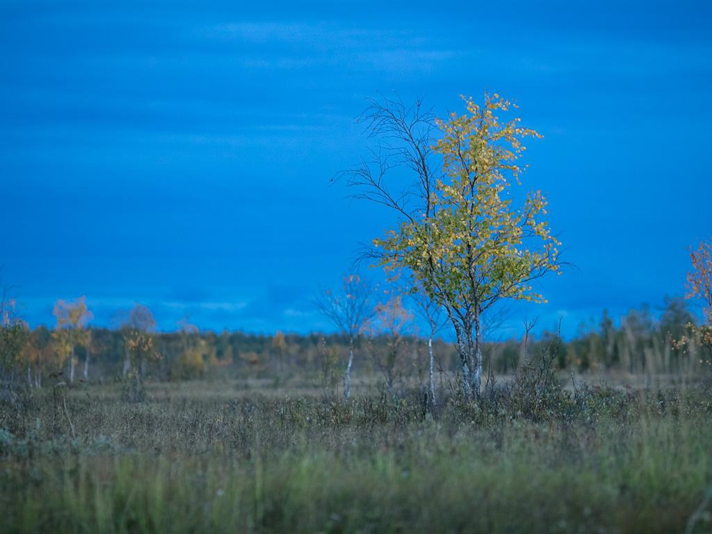 Lapponia_Finlandia_Svezia_Autunno_Foliage_-39