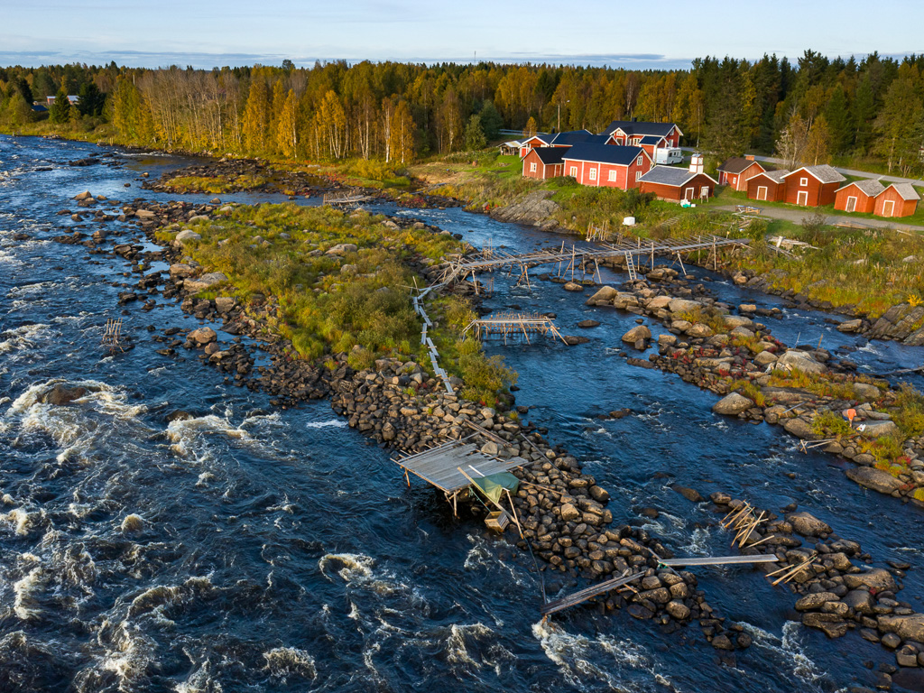 Lapponia_Finlandia_Svezia_Autunno_Foliage_-47