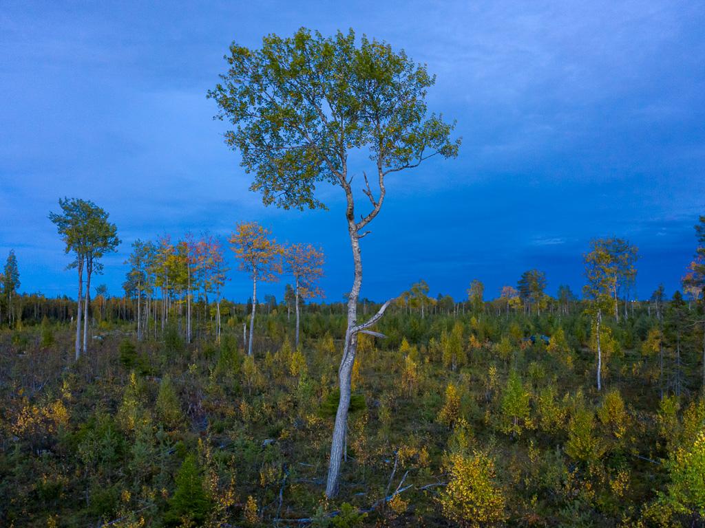 Lapponia_Finlandia_Svezia_Autunno_Foliage_-48