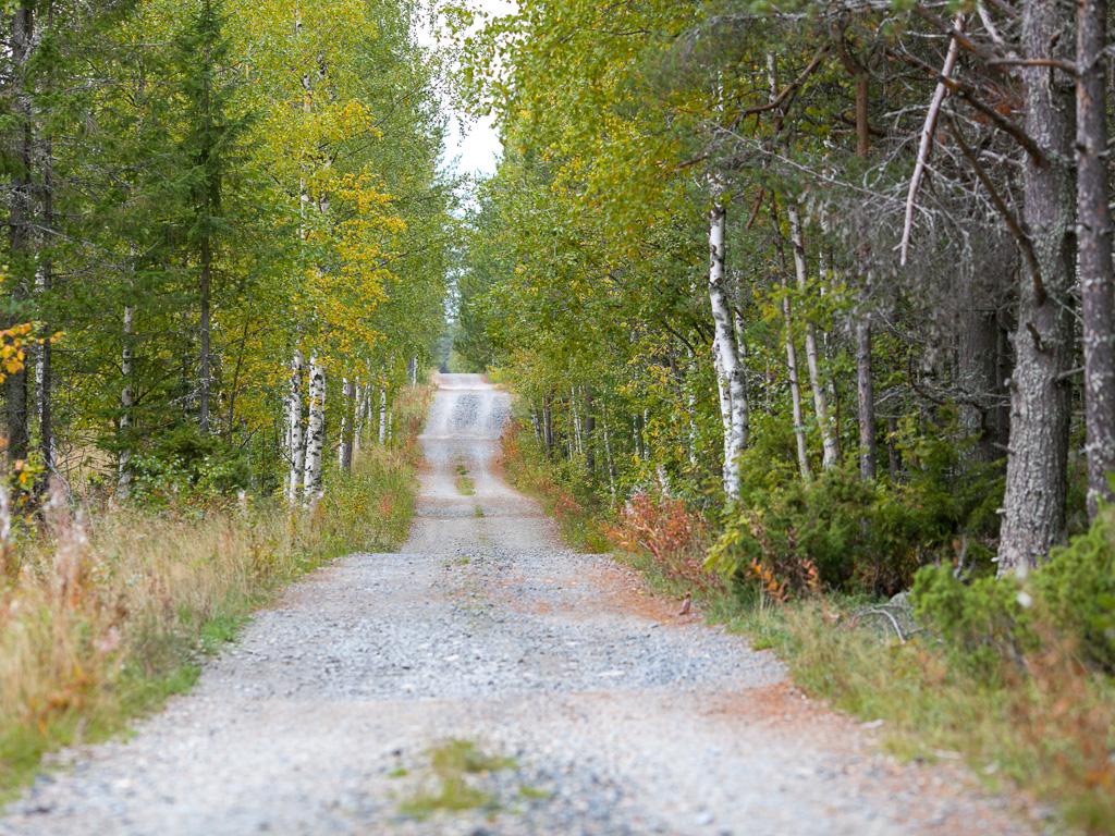 Lapponia_Finlandia_Svezia_Autunno_Foliage_-49