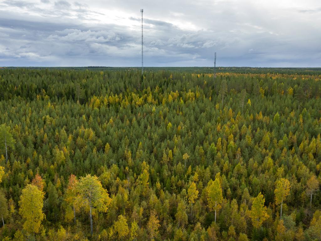 Lapponia_Finlandia_Svezia_Autunno_Foliage_-52