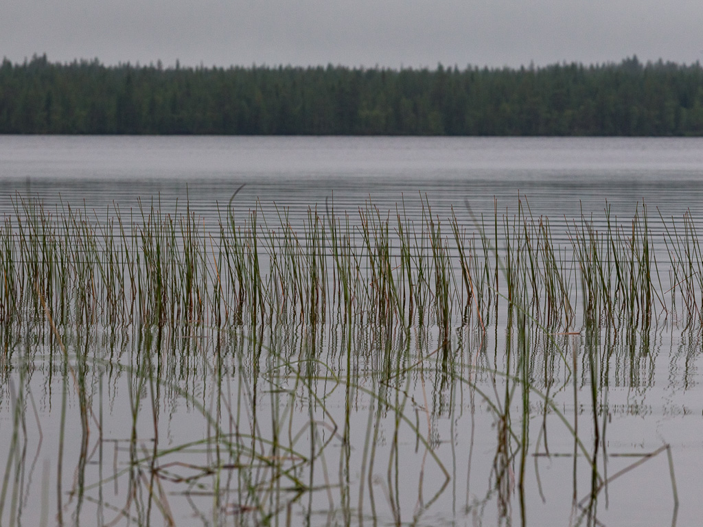 Lapponia_Finlandia_Svezia_Autunno_Foliage_-59