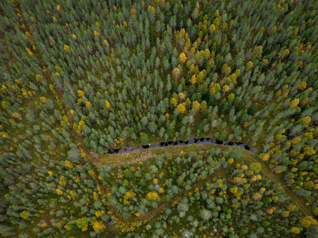 Lapponia_Finlandia_Svezia_Autunno_Foliage_-61