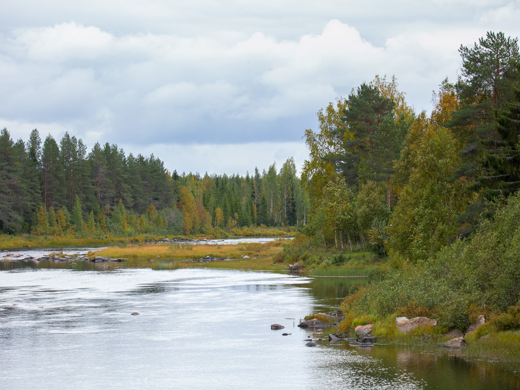 Lapponia_Finlandia_Svezia_Autunno_Foliage_-62