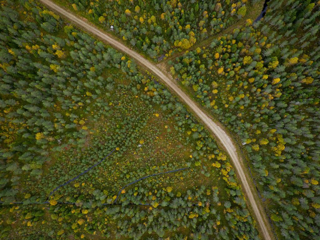 Lapponia_Finlandia_Svezia_Autunno_Foliage_-68