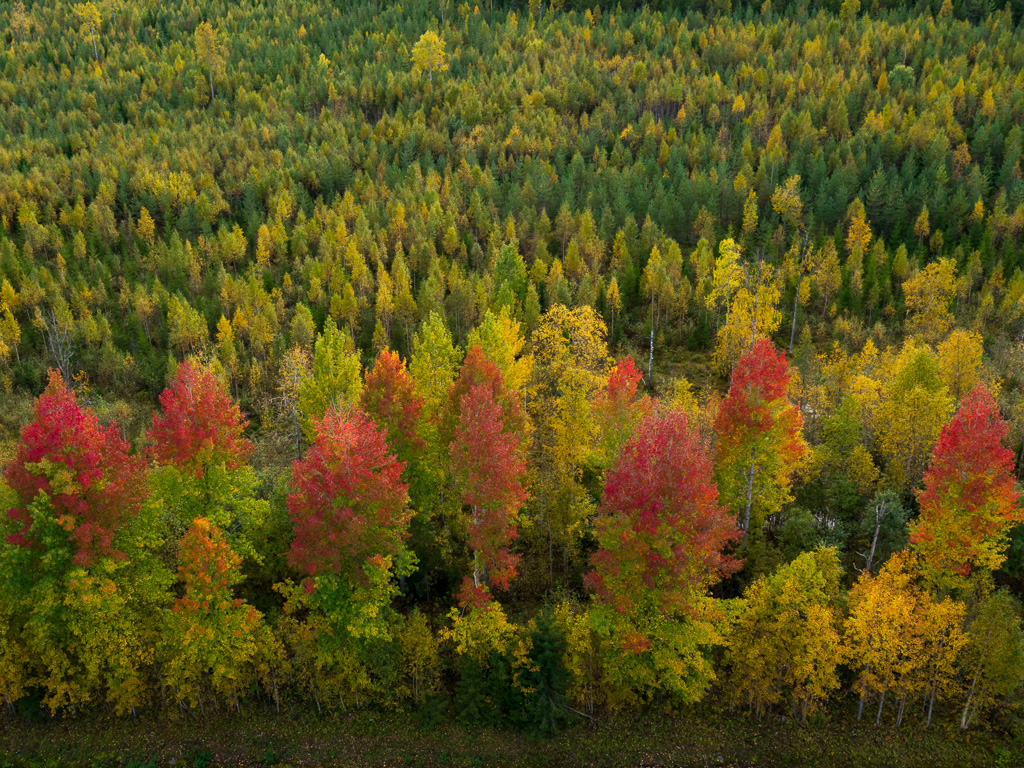 Lapponia_Finlandia_Svezia_Autunno_Foliage_-71