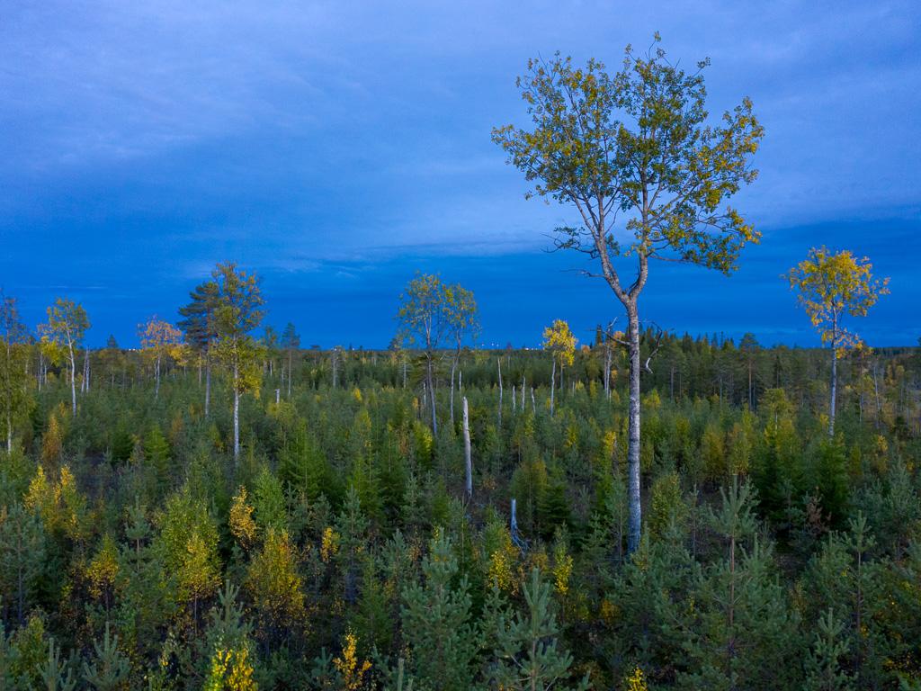 Lapponia_Finlandia_Svezia_Autunno_Foliage_-73