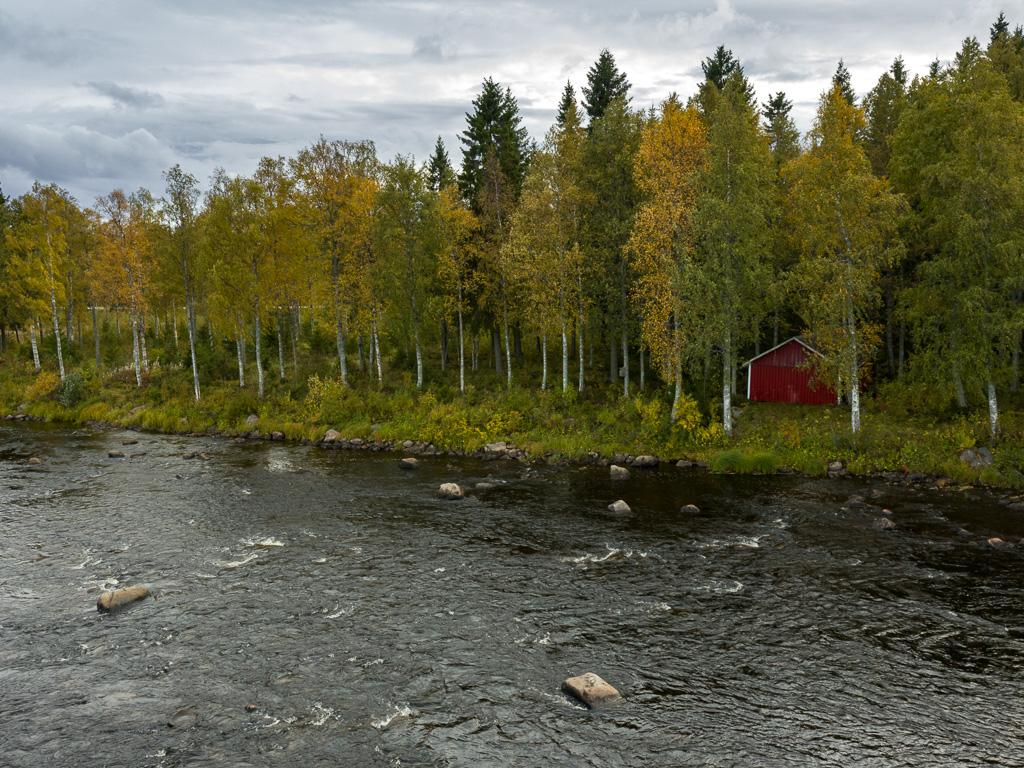 Lapponia_Finlandia_Svezia_Autunno_Foliage_-76