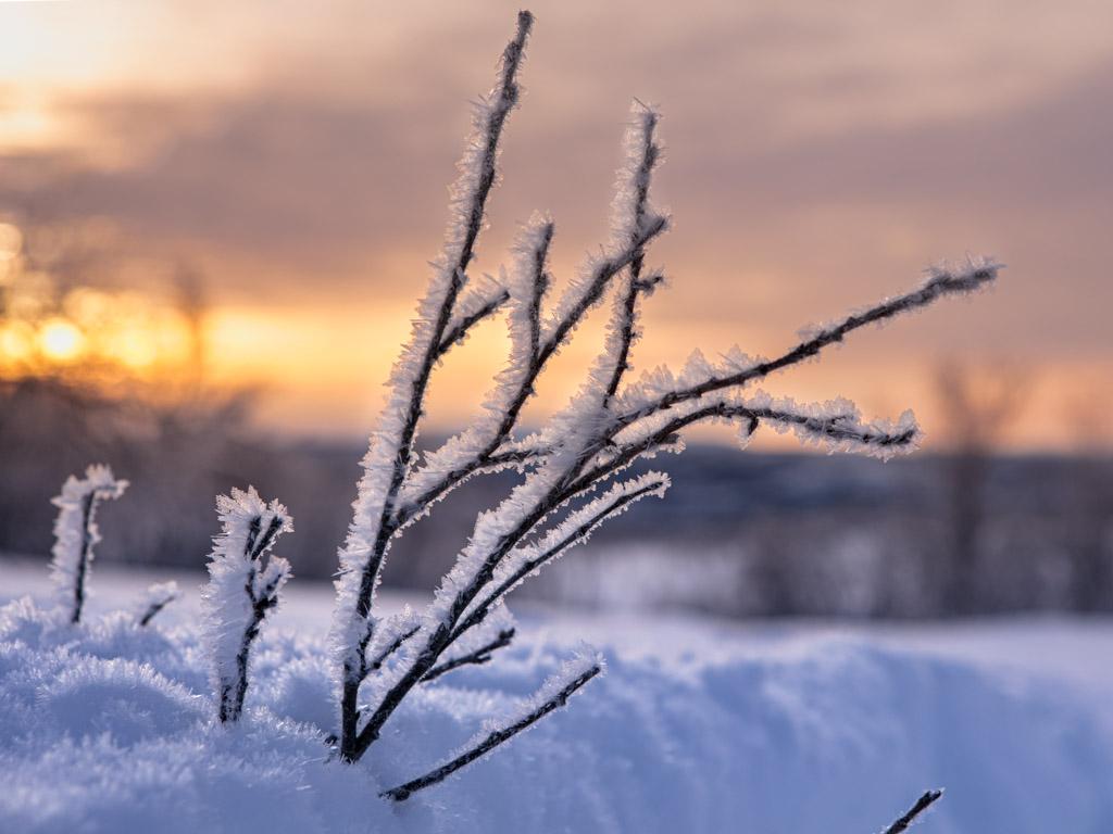 2020-Febbraio-Viaggio-Lapponia-Capo-Nord-Norvegia-Aurora-Alba-Mezzogiorno-Rametto-Neve