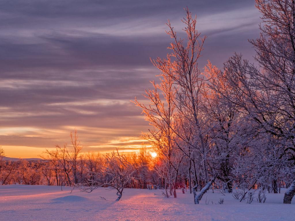 2020-Febbraio-Viaggio-Lapponia-Capo-Nord-Norvegia-Aurora-Alba-Mezzogiorno-Sole-Alberi-1