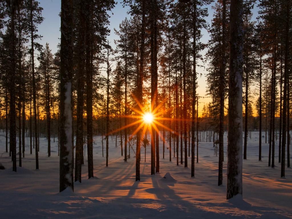 2020-Febbraio-Viaggio-Lapponia-Capo-Nord-Norvegia-Aurora-Alba-Mezzogiorno-Sole-Alberi-2.jpg