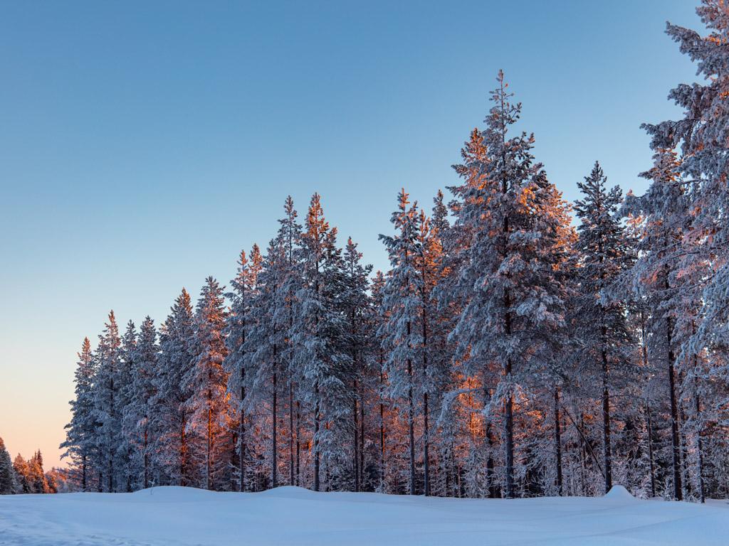 2020-Febbraio-Viaggio-Lapponia-Capo-Nord-Norvegia-Aurora-Alba-Mezzogiorno-Sole-Alberi-3.jpg