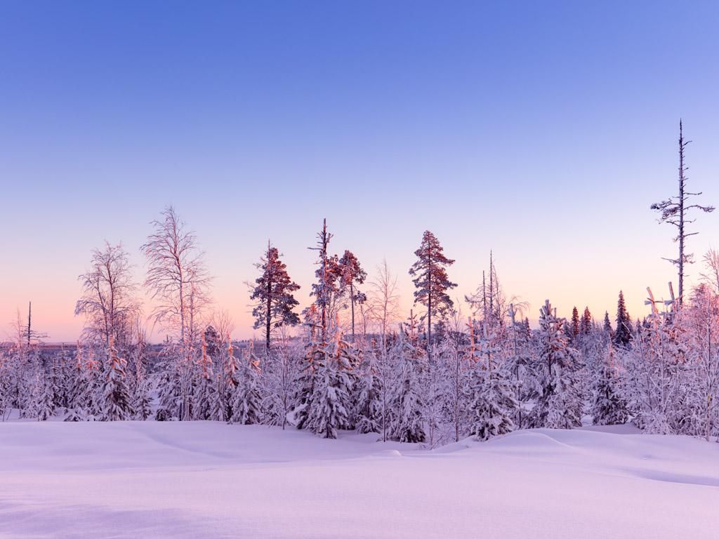 2020-Febbraio-Viaggio-Lapponia-Capo-Nord-Norvegia-Aurora-Alba-Mezzogiorno-viola-Alberi