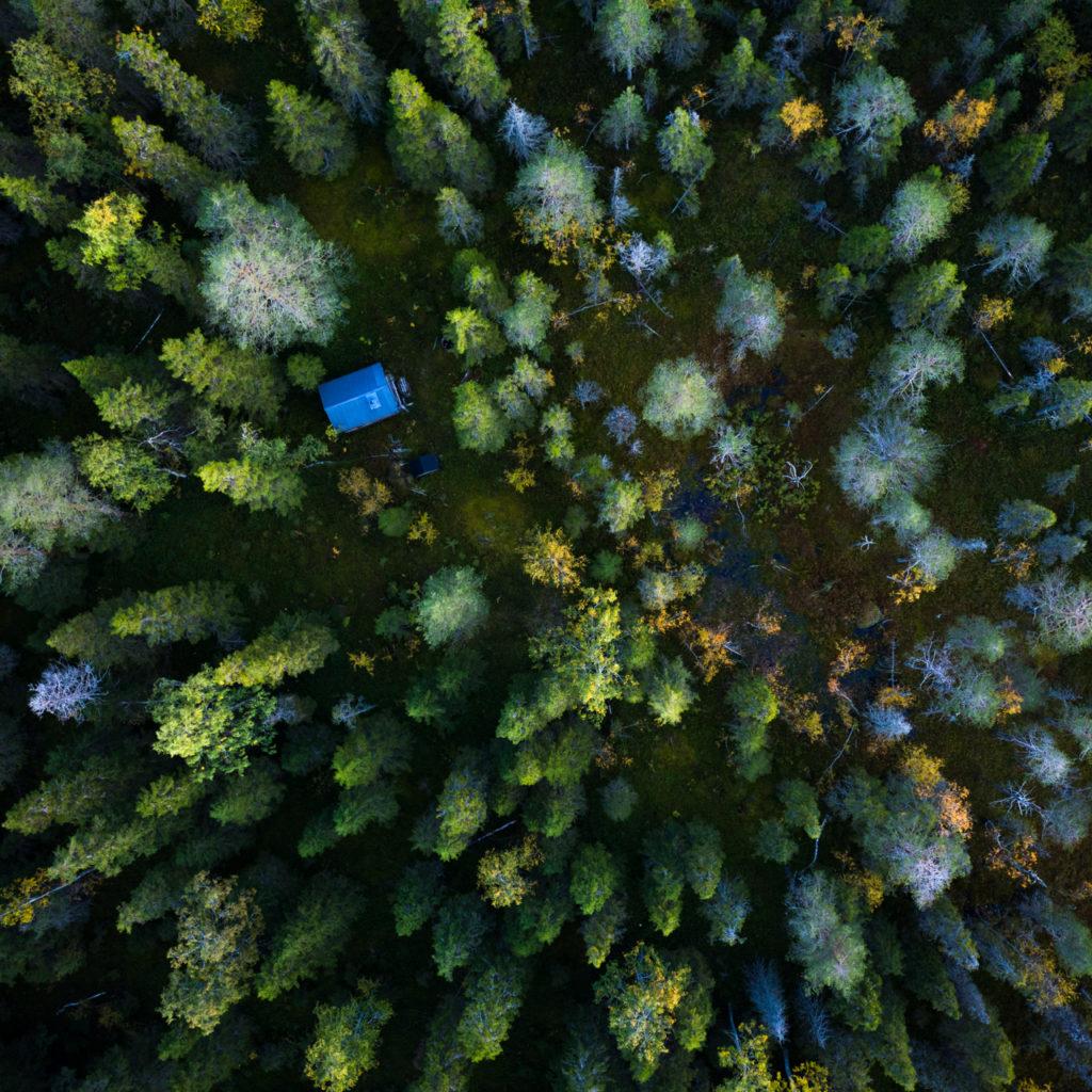 Lapponia_Alberi_Drone_Svezia-1024x1024.jpg