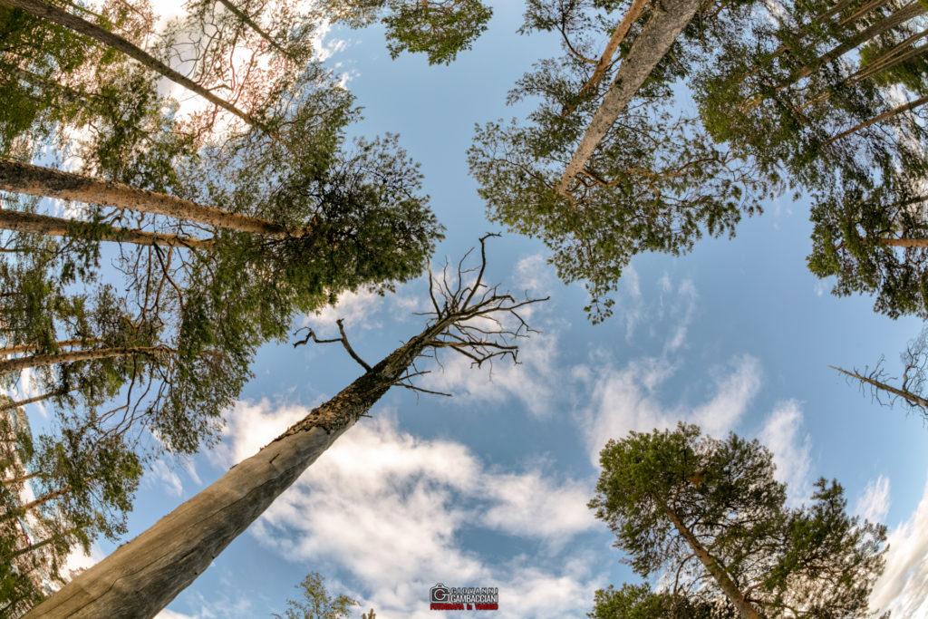 Gallerie dai Viaggi  Y1A8594-Modifica-1024x683 Luglio 2016 - Lapponia, Storia di una calda estate