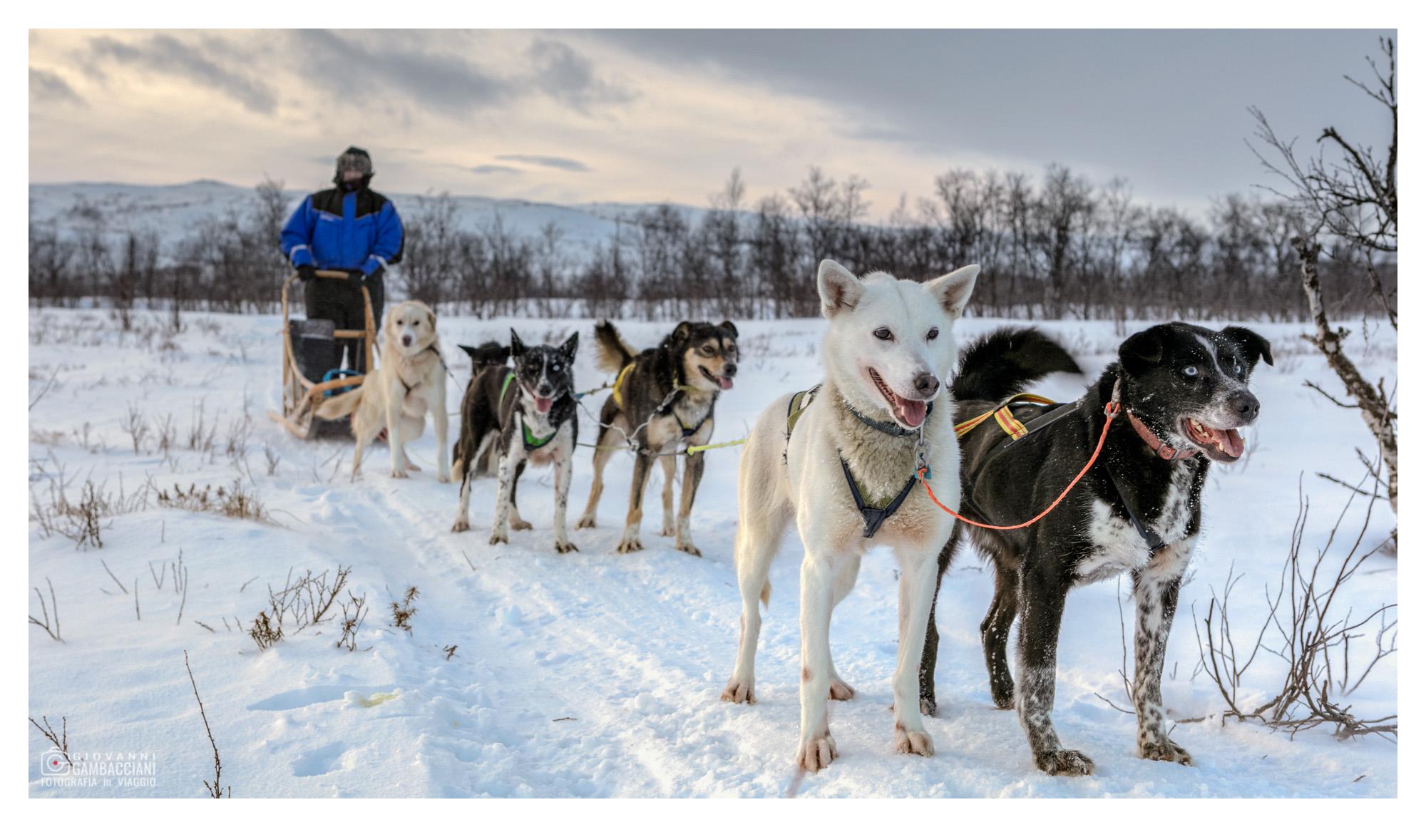Viaggi di Gruppo  Y1A9869-Modifica [CONCLUSO] Autentico Natale in Lapponia: Da Venerdì 22 a Mercoledì 27 Dicembre 2017