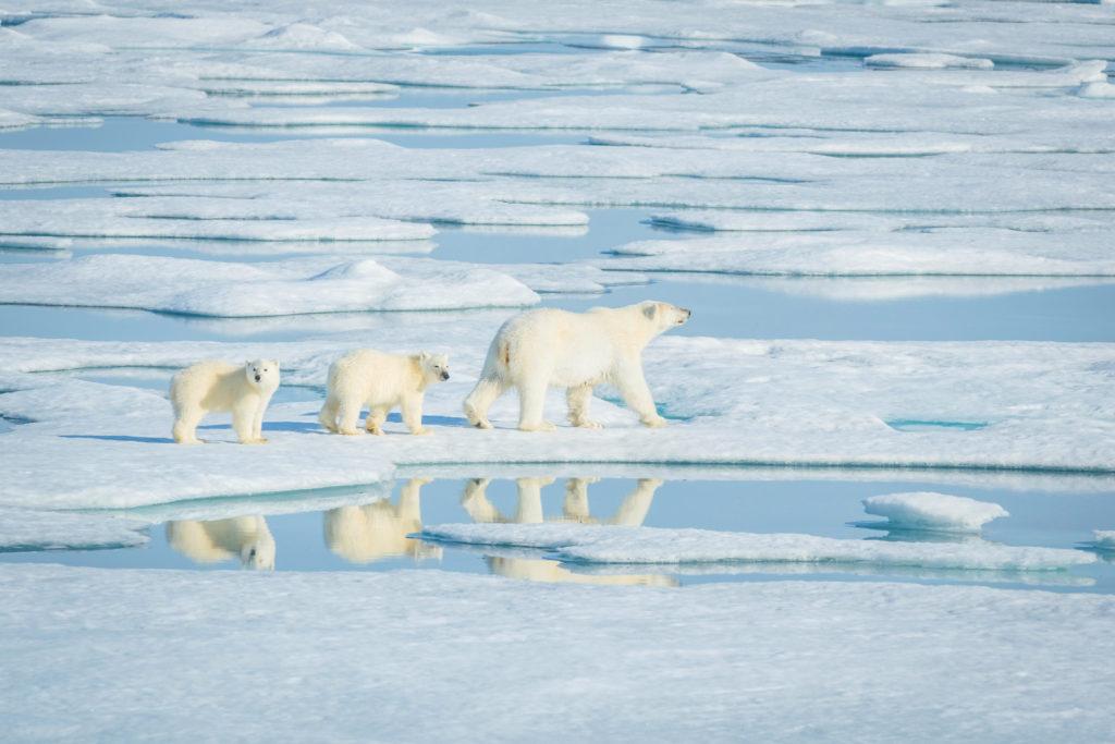 Viaggi di Gruppo  AdobeStock_237429600-1024x683 [CONCLUSO] Alla Fine del Mondo. Isole Svalbard, 6-14 Settembre 2019