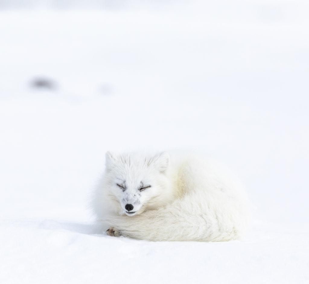 Viaggi di Gruppo  AdobeStock_256500023-e1566542882307-1024x942 [CONCLUSO] Alla Fine del Mondo. Isole Svalbard, 6-14 Settembre 2019