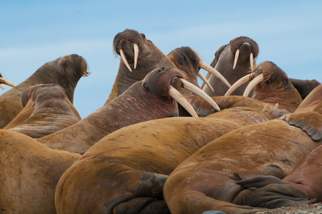 Viaggi di Gruppo  AdobeStock_89579913-1024x680 [CONCLUSO] Alla Fine del Mondo. Isole Svalbard, 6-14 Settembre 2019