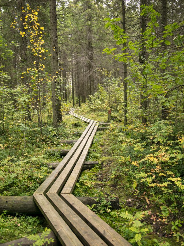 Viaggi di Gruppo  264A3029-768x1024 [RINVIATO al 2021] Maggio 2020, Il risveglio della Natura