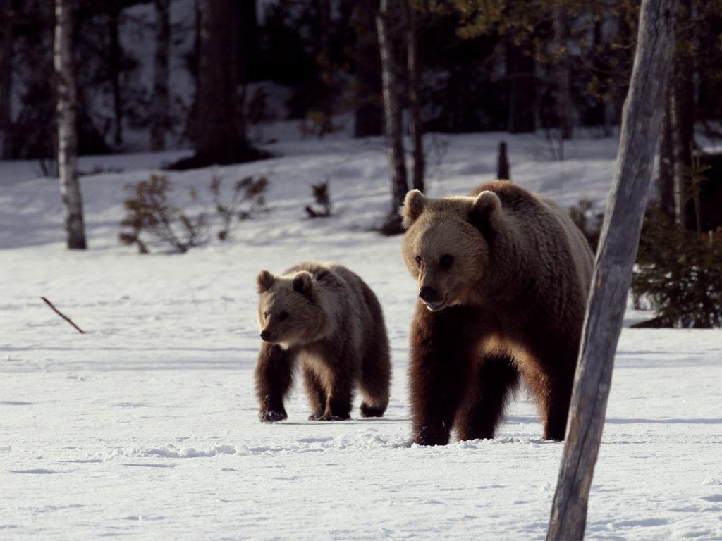 Viaggi di Gruppo  Pikku-Hitta-ja-eraukset-47_mod-1024x768 29 Aprile-5 Maggio 2020, Il risveglio della Natura, Viaggio di BioWatching
