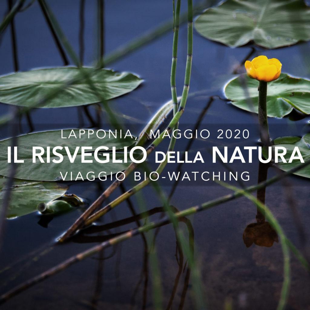 Viaggi di Gruppo  copertina_viaggi2020_05-1024x1024 29 Aprile-5 Maggio 2020, Il risveglio della Natura, Viaggio di BioWatching