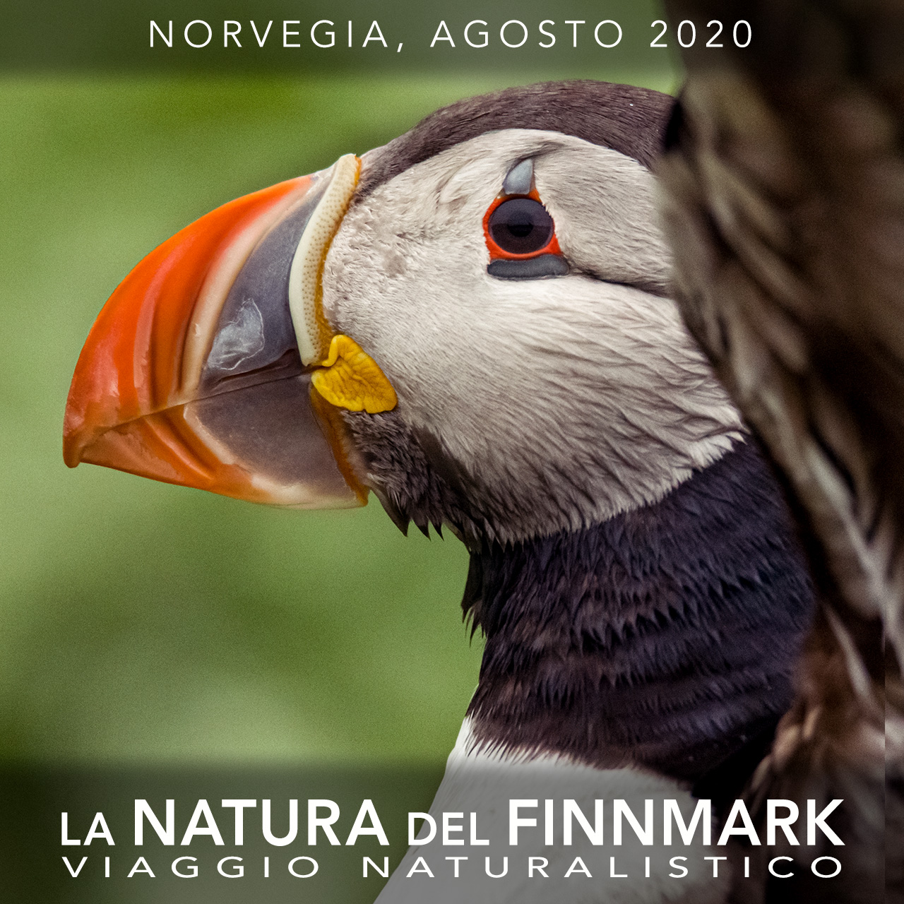 Viaggi di Gruppo  2020_08_01_Finnmark_Cover05A 27 LUGLIO - 4 AGOSTO 2020, LA NATURA DEL FINNMARK