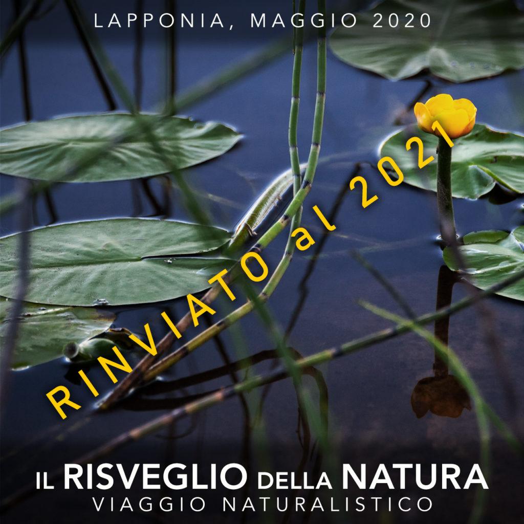 Viaggi di Gruppo  RisveglioNatura_copertina5B_rinviato-1024x1024 [RINVIATO al 2021] Maggio 2020, Il risveglio della Natura