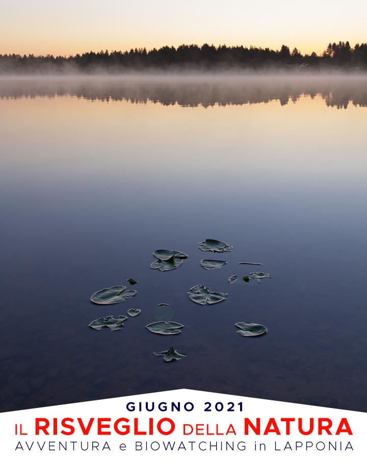 Viaggi di Gruppo  RisveglioNatura21_copertina_V54_02 2-7 Giugno 2021. Il risveglio della Natura. BioWatching in Lapponia con Giulia Bimbi
