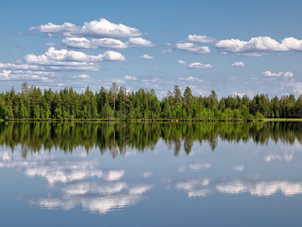 Viaggi di Gruppo  Y1A0026-Edit-1 2-7 Giugno 2021. Il risveglio della Natura. BioWatching in Lapponia con Giulia Bimbi