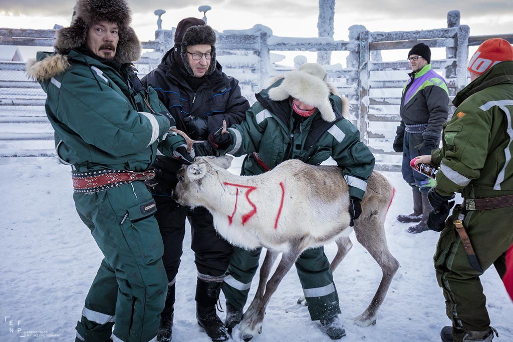 Storie di luoghi lontani  Sami-0 Storia di un incontro con i Sami del Finnmark