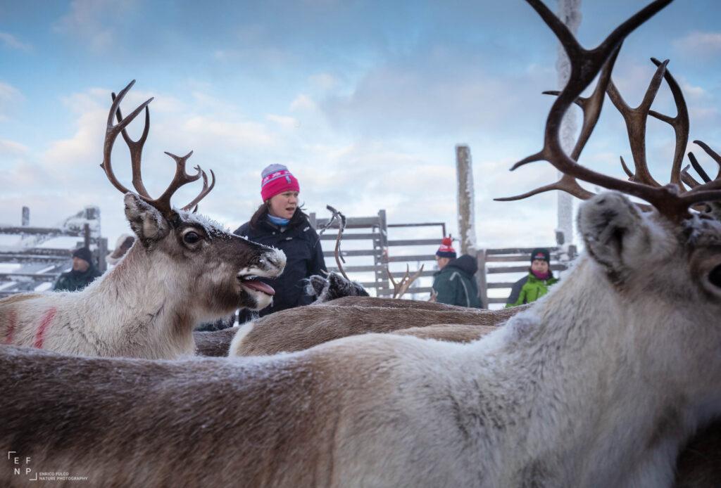 Storie di luoghi lontani  Sami-1-1024x694 Storia di un incontro con i Sami del Finnmark