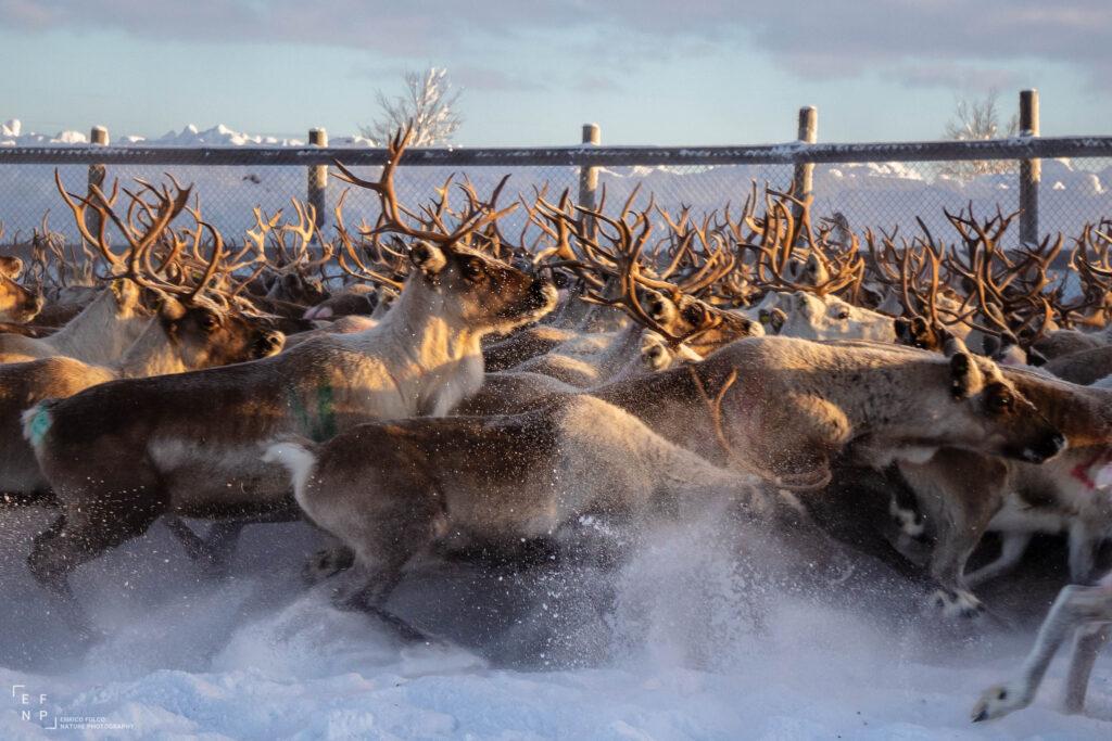 Storie di luoghi lontani  Sami-10-1024x683 Storia di un incontro con i Sami del Finnmark
