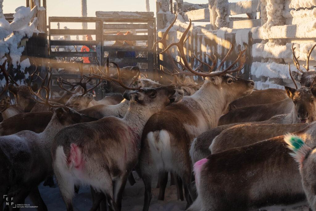 Storie di luoghi lontani  Sami-11-1024x682 Storia di un incontro con i Sami del Finnmark