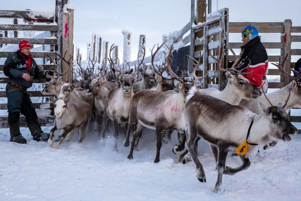 Storie di luoghi lontani  Sami-2-1024x683 Storia di un incontro con i Sami del Finnmark