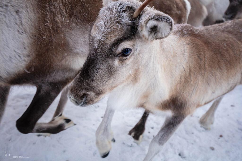 Storie di luoghi lontani  Sami-5-1024x683 Storia di un incontro con i Sami del Finnmark