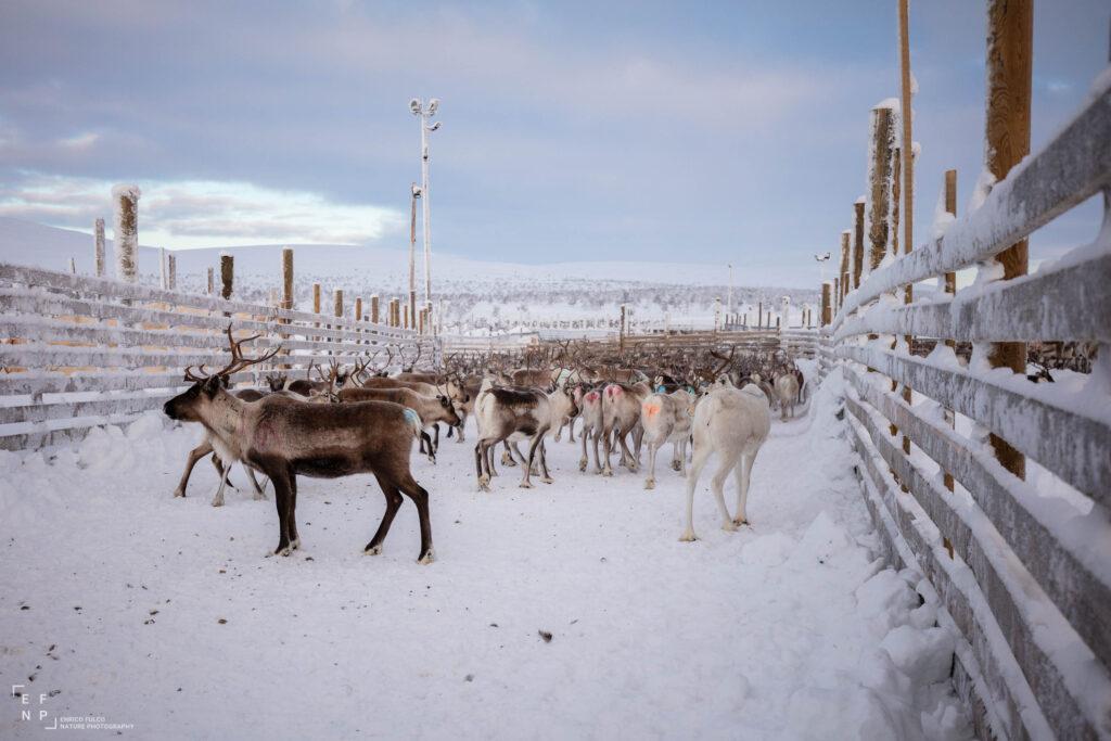 Storie di luoghi lontani  Sami-6-1024x683 Storia di un incontro con i Sami del Finnmark