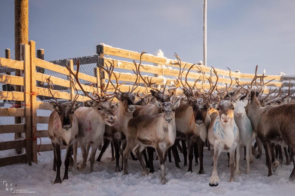 Storie di luoghi lontani  Sami-8-1024x683 Storia di un incontro con i Sami del Finnmark