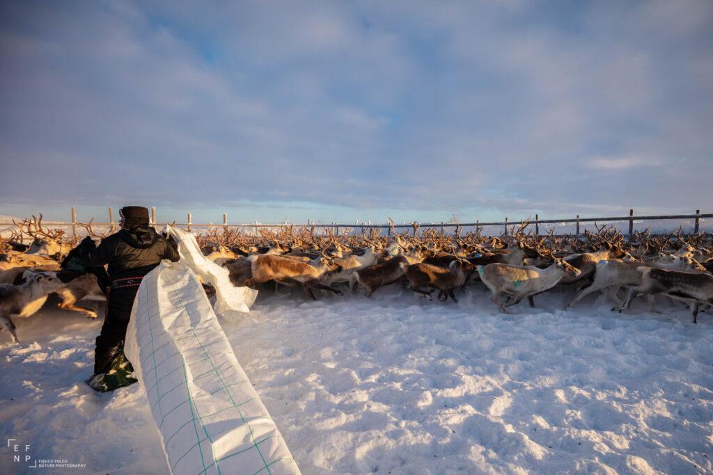 Storie di luoghi lontani  Sami-9-1024x683 Storia di un incontro con i Sami del Finnmark