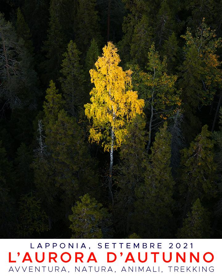 Viaggi di Gruppo  Lapponia_autunno21_copertina_V54_01e [ANTEPRIMA] Settembre 2021. L'Aurora d'Autunno, con Giulia Bimbi