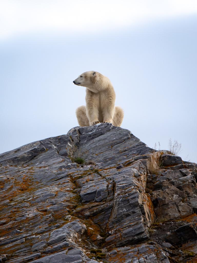 Viaggi di Gruppo  4B4A0864 [ANTEPRIMA] Giugno 2022. La Natura del Polo Nord